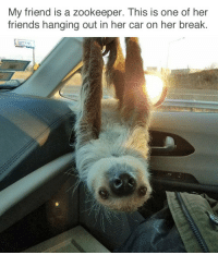 """Friends, Target, and Tumblr: My friend is a zookeeper. This is one of her  friends hanging out in her car on her break <p>via <a href=""""http://babyanimalgifs.tumblr.com/"""" target=""""_blank"""">@simonjones11</a></p>"""