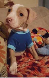 Puppy, Friend, and Just: My friend just adopted a puppy