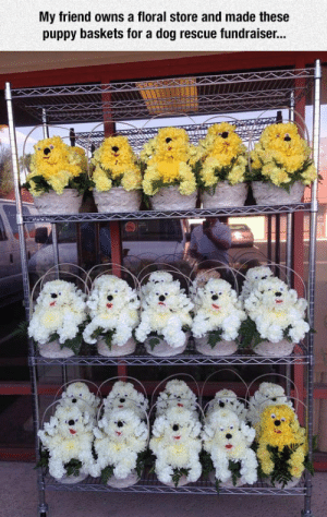 srsfunny: Puppy Baskets: My friend owns a floral store and made these  puppy baskets for a dog rescue fundraiser... srsfunny: Puppy Baskets