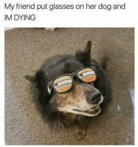 Memes, 🤖, and Dog: My friend put glasses on her dog and  IM DYING 😂😂😂😂👏 @will_ent - - - - - - - text post textpost textposts relatable comedy humour funny kyliejenner kardashians hiphop follow4follow f4f kanyewest like4like l4l tumblr tumblrtextpost imweak lmao justinbieber relateable lol hoeposts memesdaily oktweet funnymemes hiphop bieber trump