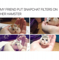 Happy Sunday!: MY FRIEND PUT SNAPCHAT FILTERS ON  HER HAMSTER Happy Sunday!