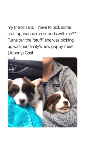 """Run, Johnny Cash, and Puppy: my friend said, """"I have to pick some  stuff up, wanna run errands with me?""""  Turns out the """"stuff"""" she was picking  up was her family's new puppy. meet  (Johnny) Cash"""