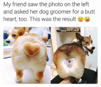 He looks so happy   Like Pupper Doggo for more!: My friend saw the photo on the left  and asked her dog groomer for a butt  heart, too. This was the result  E  UP2Y He looks so happy   Like Pupper Doggo for more!