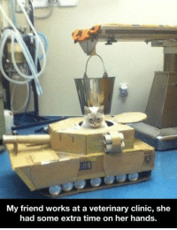 Tumblr, Blog, and Http: My friend works at a veterinary clinic, she  had some extra time on her hands srsfunny:  Kitty Tank