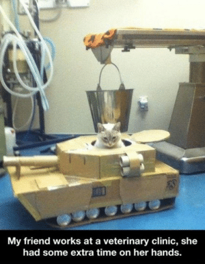 Tumblr, Blog, and Http: My friend works at a veterinary clinic, she  had some extra time on her hands srsfunny:Kitty Tank
