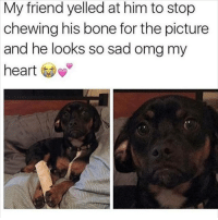 Memes, Omg, and Sad: My friend yelled at him to stop  chewing his bone for the picture  and he looks so sad omg my  hear