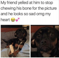 Omg, Heart, and Sad: My friend yelled at him to stop  chewing his bone for the picture  and he looks so sad omg my  heart