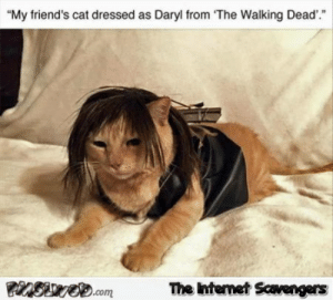 """Friends, Funny, and Meme: """"My friend's cat dressed as Daryl from The Walking Dead'.""""  The Intemet Scavengers Cat dressed as Daryl from the Walking Dead funny meme 