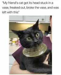 "The Egyptian goddess swag choker: ""My friend's cat got its head stuck in a  vase, freaked out, broke the vase, and was  left with this"" The Egyptian goddess swag choker"