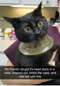 We have a new God! https://9gag.com/gag/aGjGLWX?ref=fbpic: My friends cat got it's head stuck in a  vase, freaked out, broke the vase, and  was left with this We have a new God! https://9gag.com/gag/aGjGLWX?ref=fbpic