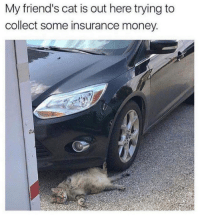 Friends, Money, and Grumpy Cat: My friend's cat is out here trying to  collect some insurance money. That's how you do it, cat.