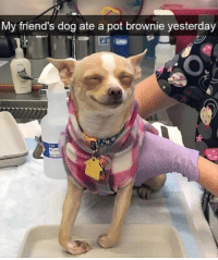 Friends, Funny, and Pictures: My friend's dog ate a pot brownie yesterday 34 Funny Pictures