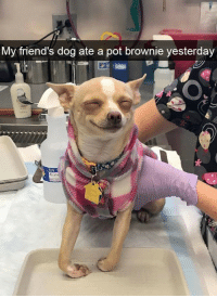 Friends, Tcs, and Dog: My friend's dog ate a pot brownie yesterday  TCS  Mice