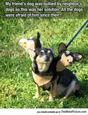 awesomesthesia:  Little Dog Is Bullied By Other Dogs, Owner Comes Up With Brilliant Idea: My friend's dog was bullied by neighbors  dogs so this was her solution. All the dogs  were afraid of him since then...  you should probably go to TheMetaPicture.com awesomesthesia:  Little Dog Is Bullied By Other Dogs, Owner Comes Up With Brilliant Idea