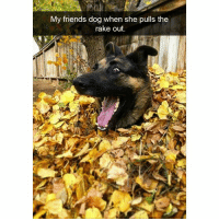 That face 😂 (@hilarious.ted): My friends dog when she pulls the  rake out. That face 😂 (@hilarious.ted)