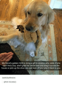 Friends, Shoes, and Ups: My friend's golden HAS to bring a gift to anyone who visits. If she  can't find a toy, she'll grab her whole bed and drag it across the  house or pick up the shoe you just took off and give it back to you.  tastefully offensive:  (photo via endur)