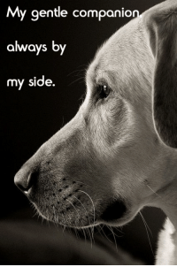 For sure: My gentle companio  always by  my  side. For sure
