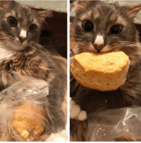 Cats, Cute, and Dogs: My girlfriend and I made biscuits.. Submitted by @subject0mega cat cats catsofinstagram kitten kittens kitty kitties funny dog fun dogs dogsofinstagram doggy doggie doggies funnydog pets gato petsofinstagram animal cute puppies pup puppy katze puppiesofinstagram cat_shaming catstagram pet kittensofinstagram