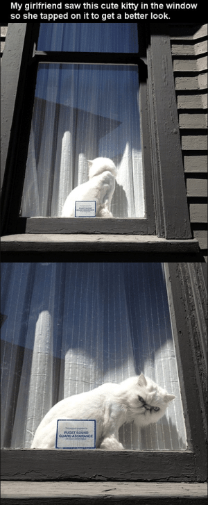 katieintherealworld:  this made me burst out laughing, so naturally i had to reblog it. : My girlfriend saw this cute kitty in the window  so she tapped on it to get a better look.   PUGET SOUND  GUARD ASSURANCE katieintherealworld:  this made me burst out laughing, so naturally i had to reblog it.