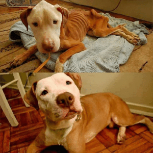 """""""My girlfriend worked at the SPCA and refused to let this sweet baby be euthanized, so she took him home.""""   She did an amazing job!: """"My girlfriend worked at the SPCA and refused to let this sweet baby be euthanized, so she took him home.""""   She did an amazing job!"""