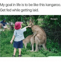 Goals af 😩😂 - Tag someone 👇🏼: My goal in life is to be like this kangaroo.  Get fed while getting laid.  @svagelj Goals af 😩😂 - Tag someone 👇🏼