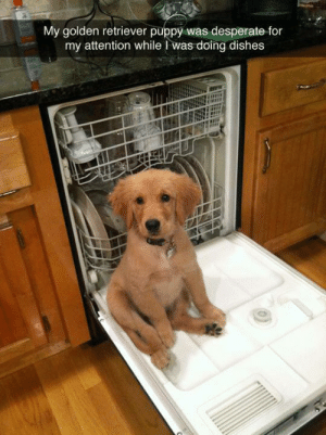 babyanimalposts:  Click for thecutest postsimaginable!: My golden retriever puppy was desperate for  my attention while I was doing dishes babyanimalposts:  Click for thecutest postsimaginable!