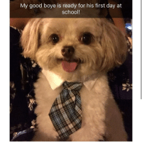 Memes, School, and Good: My good boye is ready for his first day at  school! Sun's up buns up time to start the day! | @cuteandfuzzybunch