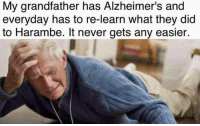 Alzheimer's, Never, and Harambe: My grandfather has Alzheimer's and  everyday has to re-learn what they did  to Harambe. It never gets any easier.