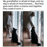 Dogs, Instagram, and Meme: My grandfather is afraid of dogs, and my  dog is afraid of most humans.... But they  gave each other a chance and together  they made it work:)  Reddit u/blackwidow 1994 @hoest was voted 'Best Meme Account on Instagram' 😫🔥