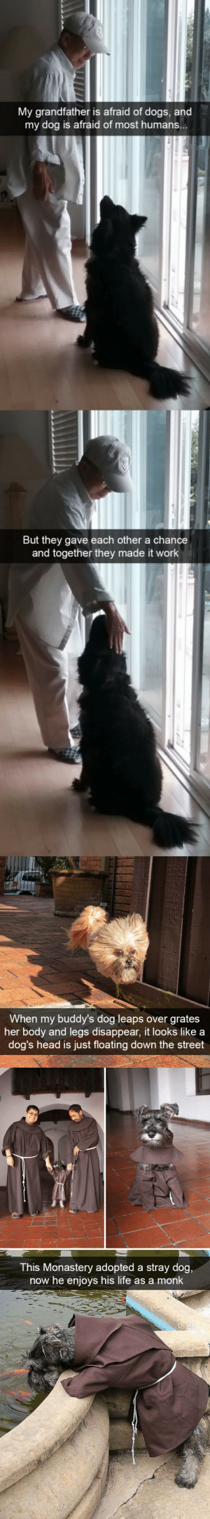 babyanimalgifs:Funny dog snaps: My grandfather is afraid of dogs, and  my dog is afraid of most humans  But they gave each other a chance  and together they made it work   When my buddy's dog leaps over grates  her body and legs disappear, it looks like a  dog's head is just floating down the street   This Monastery adopted a stray dog  now he enjoys his life as a monk babyanimalgifs:Funny dog snaps