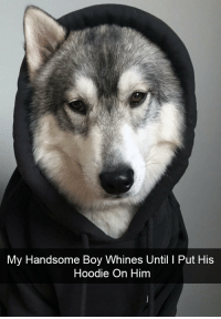 Handsome Boy: My Handsome Boy Whines Until 1 Put His  Hoodie On Himm