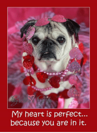 Memes, Valentine's Day, and Calendar: My heart is perfect...  because you are in it. Hi friends! Tomorrow is National Dress Up Your Pet DAY !!! YAY! This is one of our FAVORITE days of the year!!! We are going all out!! We can't wait to see all of you cuties dressed up, too!!! We know you will look out of this world!! Please post your pictures starting today. We will be sharing some and putting everyone into the drawing!!!  One lucky winner will receive a sweet gift pack filled with: An adorable pug outfit ( you specify boy or girl) , a 3 PACK of 2017 Gretta's Girls Calendars and a Pack of 10 adorable Valentine's Day cards from Gretta's Girls too! See them here >>> https://www.etsy.com/shop/GrettasGirls?ref=hdr_shop_menu&section_id=20829681
