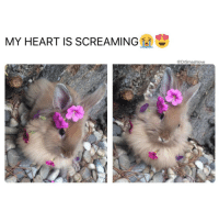 This bunny is how I feel when I take a shower at a girl's crib and all she got is extremely girly shower products *strolls into works smelling of rose, hibiscus, coconut and daffodils* *feels chakras aligning as delicate, dainty and LeBeautiful feminine fragrance notes tease my nostrils and soothe my spirit* *namaste AF* 🌺 🌹 🌸😍😂😂😂: MY HEART IS SCREAMING  @Dr Smashlove This bunny is how I feel when I take a shower at a girl's crib and all she got is extremely girly shower products *strolls into works smelling of rose, hibiscus, coconut and daffodils* *feels chakras aligning as delicate, dainty and LeBeautiful feminine fragrance notes tease my nostrils and soothe my spirit* *namaste AF* 🌺 🌹 🌸😍😂😂😂