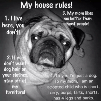 Clothes, Memes, and Moms: My house rules!  3. My mom likes  1. I live  me better than  most people!  here, you  don't!  2. If you  don't want  dog hair on  your clothes,  4. To you I'm just a dog.  stay off of  To my mom, I am an  adopted child who is short,  MY  furniture!  furry, burps, farts, snorts,  has 4 legs and barks. Amen.