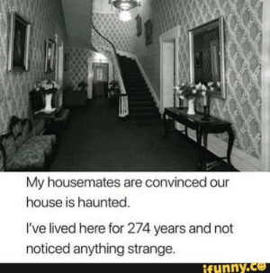 My housemates are convinced our house is haunted, I've lived here for 274 years and not noticed anything strange, – popular memes on the site iFunny.co #music #artcreative #spicy #dank #relatable #funny #10at10 #alternatefeatures #featureworthy #my #housemates #house #haunted #ive #lived #here #years #not #noticed #strange #pic: My housemates are convinced our  house is haunted.  I've lived here for 274 years and not  noticed anything strange.  ifunny.co My housemates are convinced our house is haunted, I've lived here for 274 years and not noticed anything strange, – popular memes on the site iFunny.co #music #artcreative #spicy #dank #relatable #funny #10at10 #alternatefeatures #featureworthy #my #housemates #house #haunted #ive #lived #here #years #not #noticed #strange #pic