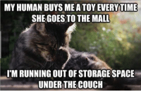 Life, Memes, and Struggle: MY HUMAN BUYS ME A TOY EVERYTIME  SHE GOES TO THE MALL  I'M RUNNING OUT OF STORAGE SPACE  UNDERTHE COUCH Life Of a Cat: The Struggle Is Real (Memes)