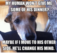 Logic, Memes, and Change: MY HUMAN WONT GIVE ME  SOME OF HIS DINNER  MAYBEIFIMOVE TO HIS OTHER  SIDE HELL CHANGE HIS MIND Dog logic
