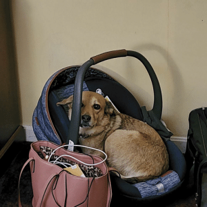 My husband and I are traveling with our baby, cat, and dog. We stopped at a hotel for the night to get some rest, and I couldn't find my dog. I look around and see this.: My husband and I are traveling with our baby, cat, and dog. We stopped at a hotel for the night to get some rest, and I couldn't find my dog. I look around and see this.