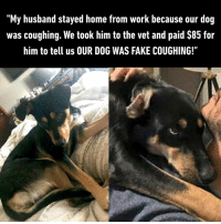 "Dank, Fake, and Work: ""My husband stayed home from work because our dog  was coughing. We took him to the vet and paid $85 for  him to tell us OUR DOG WAS FAKE COUGHING!"" Doggo just wanted more time to be with you  By Kennnaughty 