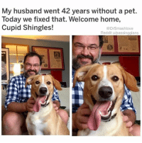(@boywithnojob) is my favorite meme page on the Gram!: My husband went 42 years without a pet.  Today we fixed that. Welcome home,  Cupid Shingles!  @DrSmashlove  Reddit u/passingglans (@boywithnojob) is my favorite meme page on the Gram!