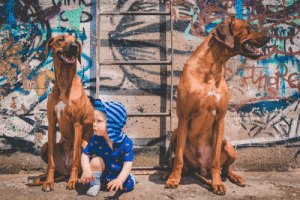 Dogs, Rap, and Kid: My kid and dogs might be about to drop the hottest rap album of the year?