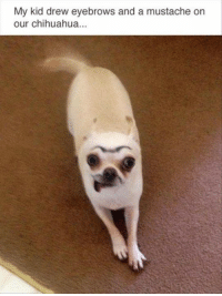 chihuahua: My kid drew eyebrows and a mustache orn  our chihuahua...