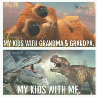 Memes, 🤖, and Uncut: MY KIDS WITH GRANDMA & GRAND pA  AR oms Life Uncut FB  My KKDS WITH ME.