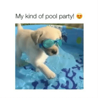 Party, Pets, and Pool: My kind of pool party!  rt comment your pets name! 🐶