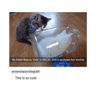 cute: My kitten likes to hide in this jar, and it confuses her brother  amanda pandagold:  This is so cute cute