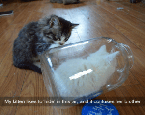 Her Brother: My kitten likes to 'hide' in this jar, and it confuses her brother  T0Aunt