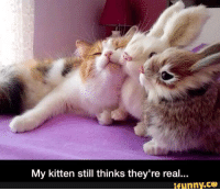 Kittens, Girl Memes, and Kitten: My kitten still thinks they're real...  ifunny.CO