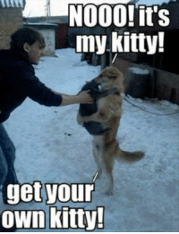 Kitties and LOLcats: my kitty!  get your  own kitty! My Kitty!
