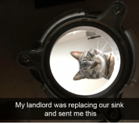 Memes, 🤖, and This: My landlord was replacing our sink  and sent me this