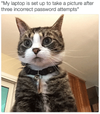 """<p><a href=""""http://babyanimalgifs.tumblr.com/"""" target=""""_blank"""">more baby <b>animals <i>here</i></b></a></p>: """"My laptop is set up to take a picture after  three incorrect password attempts"""" <p><a href=""""http://babyanimalgifs.tumblr.com/"""" target=""""_blank"""">more baby <b>animals <i>here</i></b></a></p>"""
